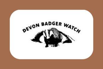 Devon Badger Watch