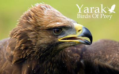 Yaraks Birds Of Prey Falconry Centre