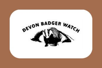 Devon Badger Watch